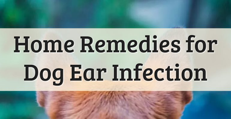 Adults Ear Illness: Evidence, Causes & Treatments