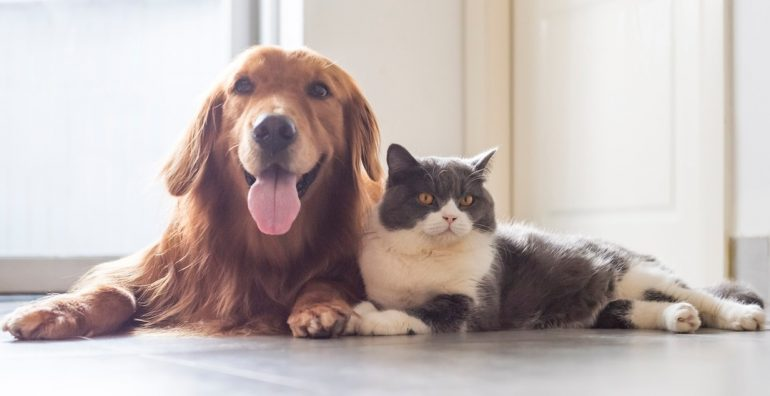 The Results of Separation, dullness and isolation Anxiety on Your Family Pet